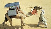1_camel_fridge.jpg